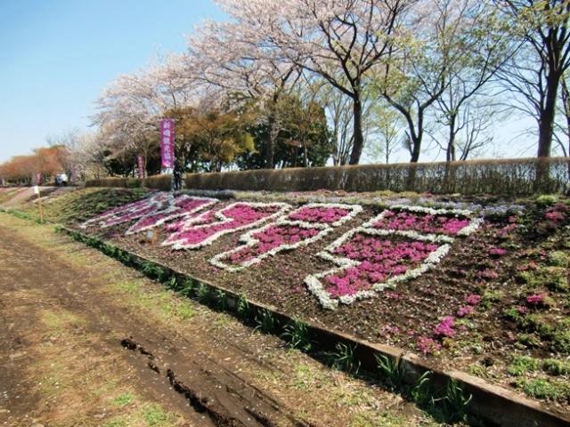 Shibazakura1879