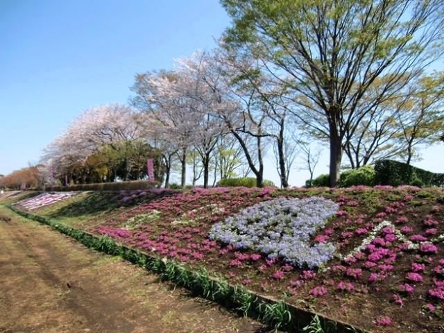 Shibazakura1883