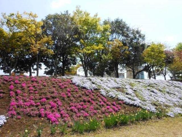 P2_shimazakura3044