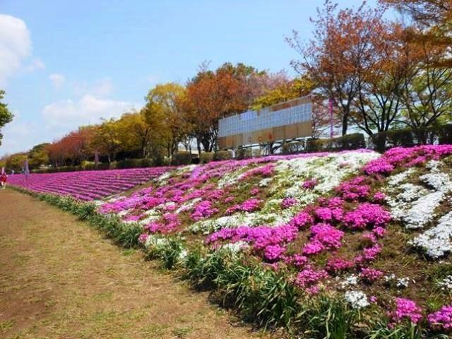 P2_shimazakura3054