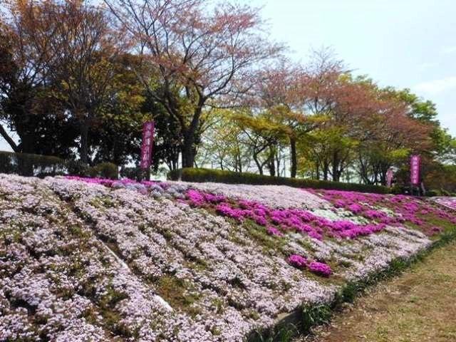 P2_shimazakura3058
