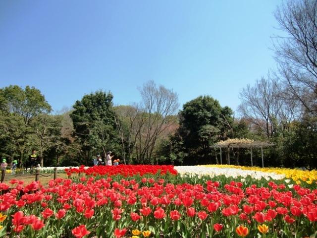 Hikijigwa0068