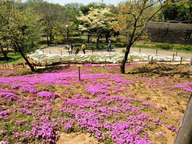 Hikijigwa0133