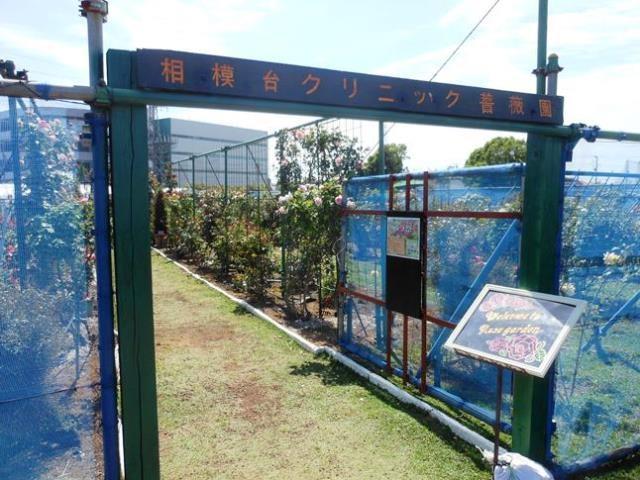 Sagamidai_bara3756