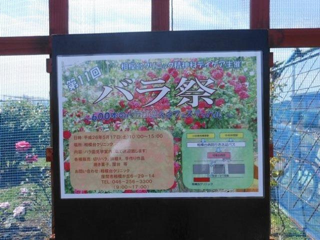 Sagamidai_bara3758