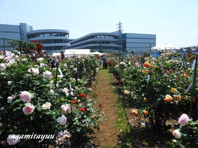 Sagamidai_c_0061