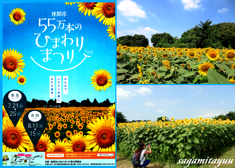 Zama_himawari_0001_4