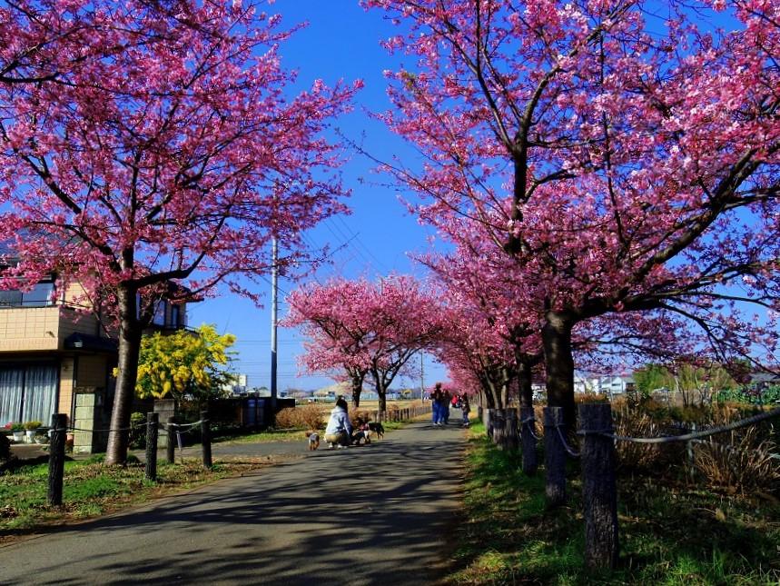 Shinto-kawaxu-4601